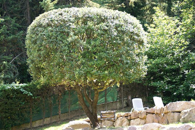 Taille arbres CFC paysages-APRES