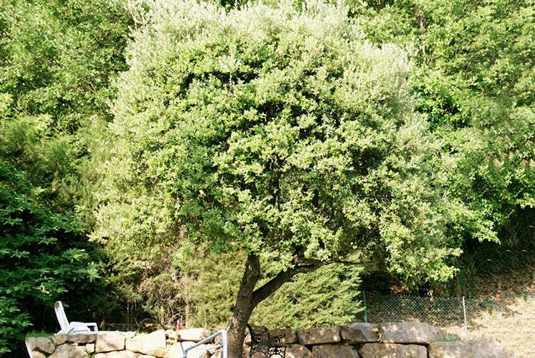 Taille arbres CFC paysages-AVANT