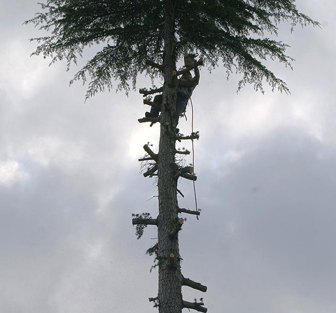 Élagages arbres CFC paysages-APRES