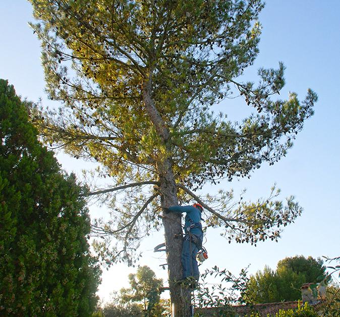 Élagages arbres CFC paysages-AVANT